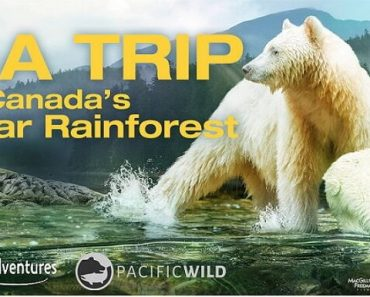 Great Bear Rainforest Survey